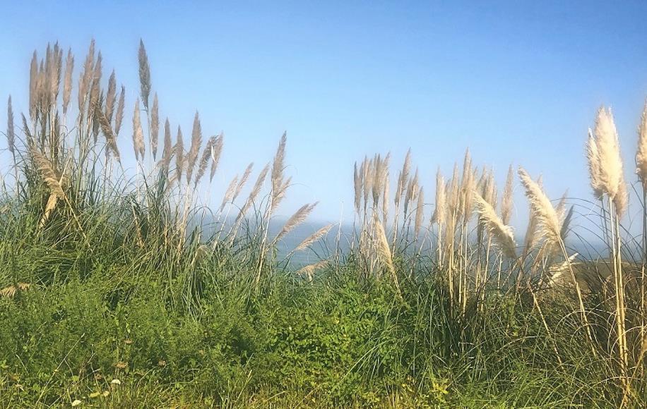 """Cs Suances critica la """"inacción"""" del Ayuntamiento ante la proliferación de plantas invasoras en el municipio"""