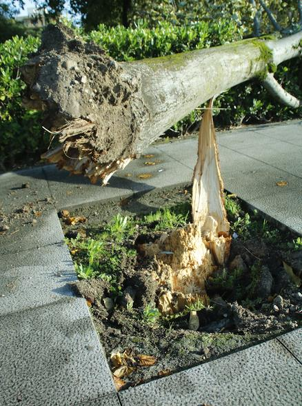 El viento arranca varios árboles del parque Manuel Barquín