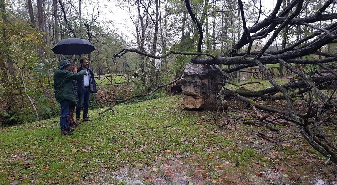 La Concejalía de Medio Ambiente trabaja para eliminar riesgos derivados del temporal y restablecer el uso público