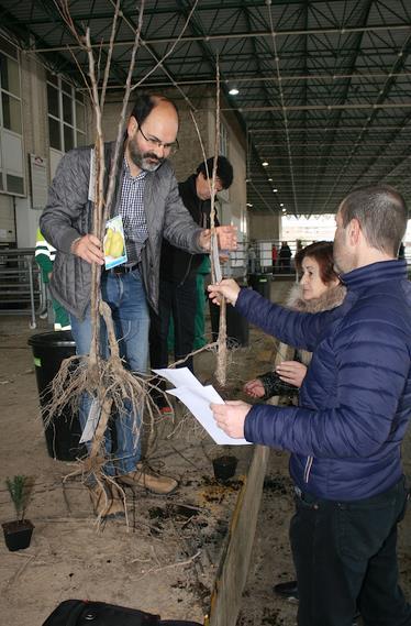 Iniciado el reparto de 3670 árboles en Torrelavega