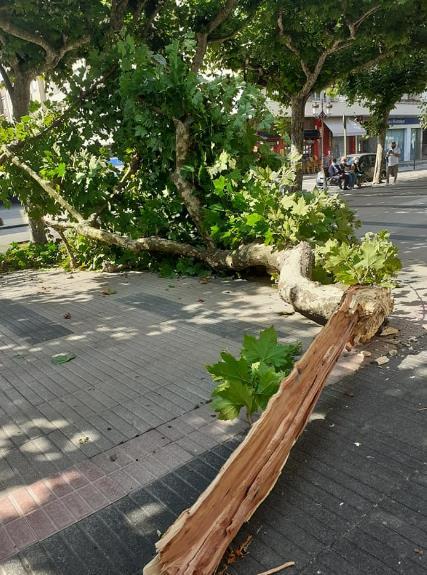 Árbol caído en la Avenida de España - Fotos cortesía de Joaquín Díaz